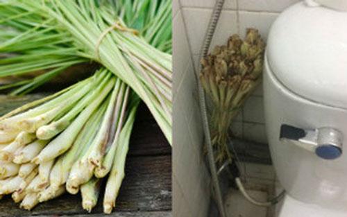 khử mùi hôi nhà vệ sinh bằng cây sả