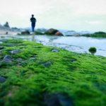 Những nguy hại do rong rêu gây ra