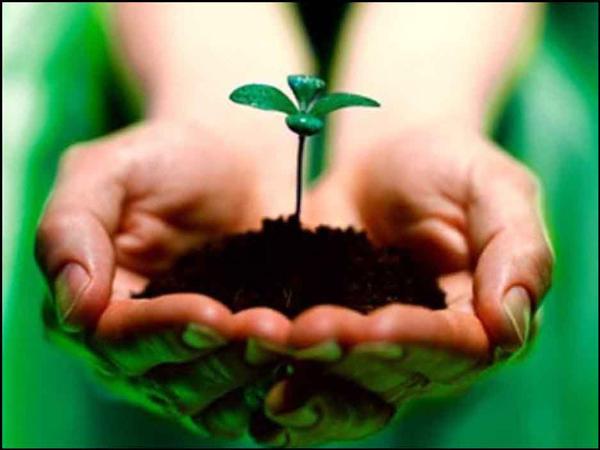 Vai trò của môi trường trong cuộc sống