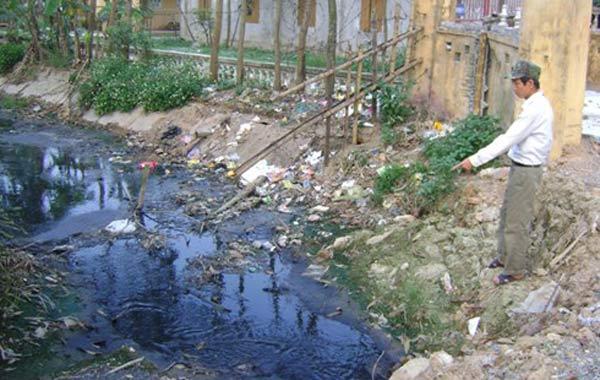 Hậu quả của nước thải ngành chăn nuôi