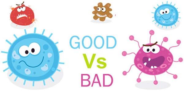 Phân loại các vi sinh vật