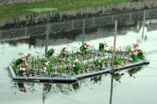 Phương pháp xử lý nước thải bằng thực vật